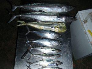fish caught offshore